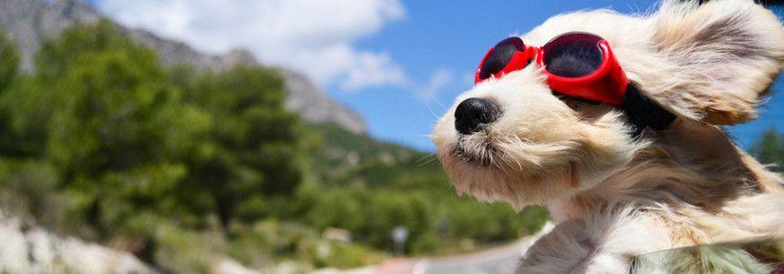 Tierhalterhaftpflicht Versicherung Tarife
